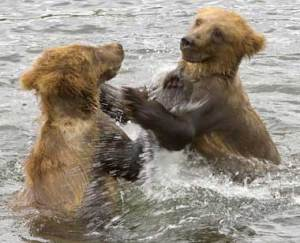 Grizzly cubs as metaphor for bullies