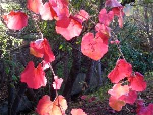 autumn leaves near a creek