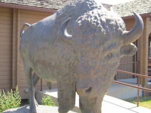 Buffalo in the Nude